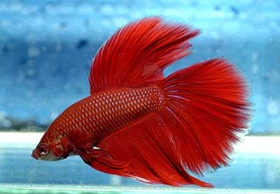 how to get my betta fish to like me