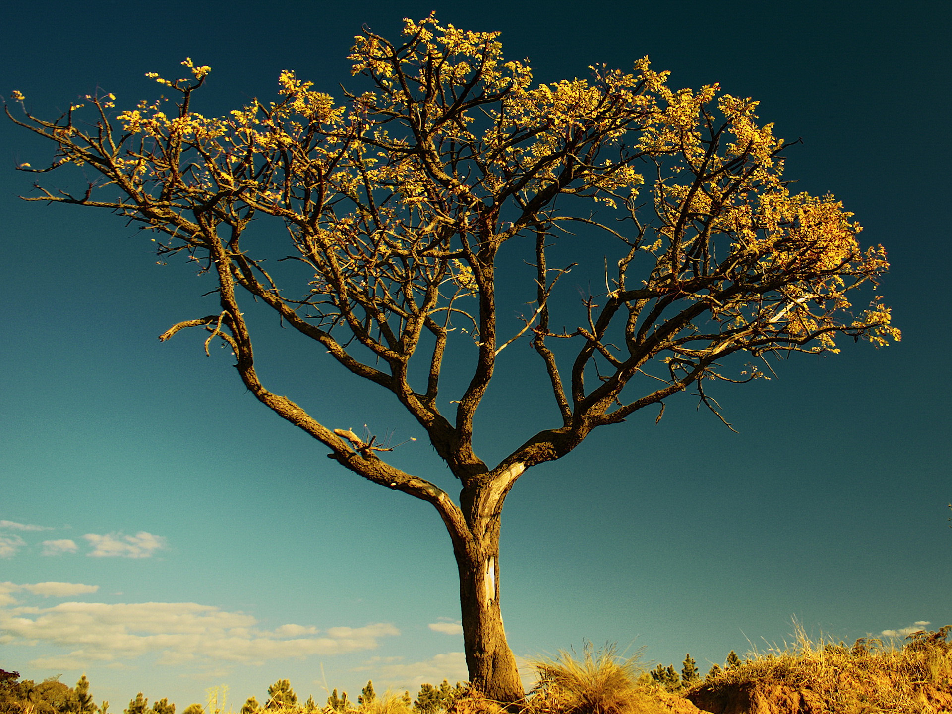 life in trees What is the meaning of the tree of life why would eating from the tree of life result in everlasting life.