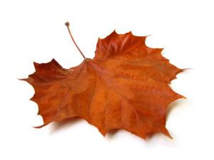 Fall falls slow in Lakonia