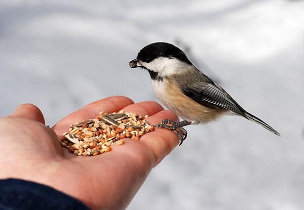 why i feed the birds